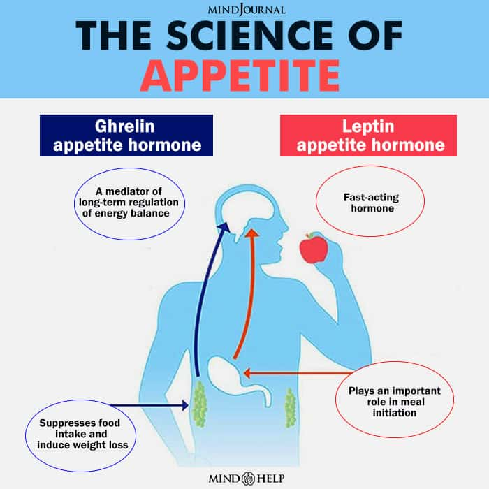 Understanding The Science Of Appetite