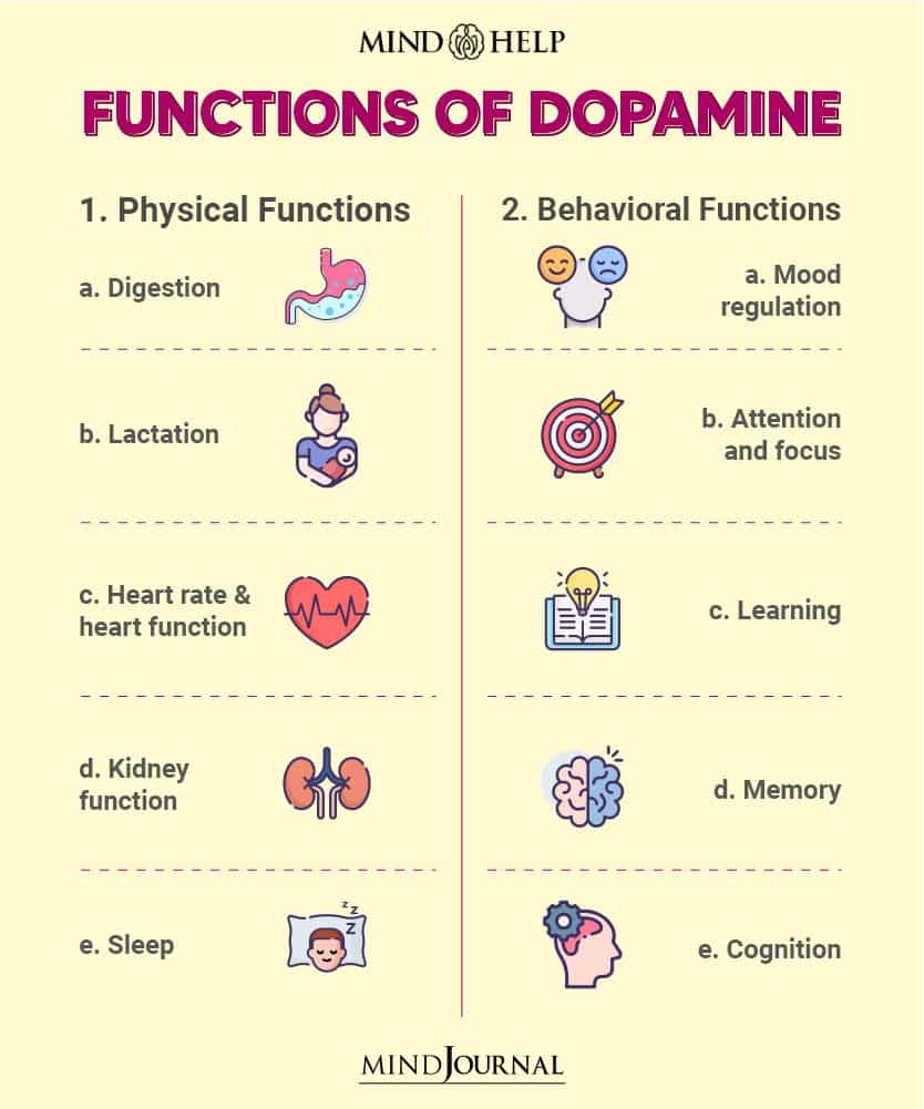 What Role Dopamine Plays